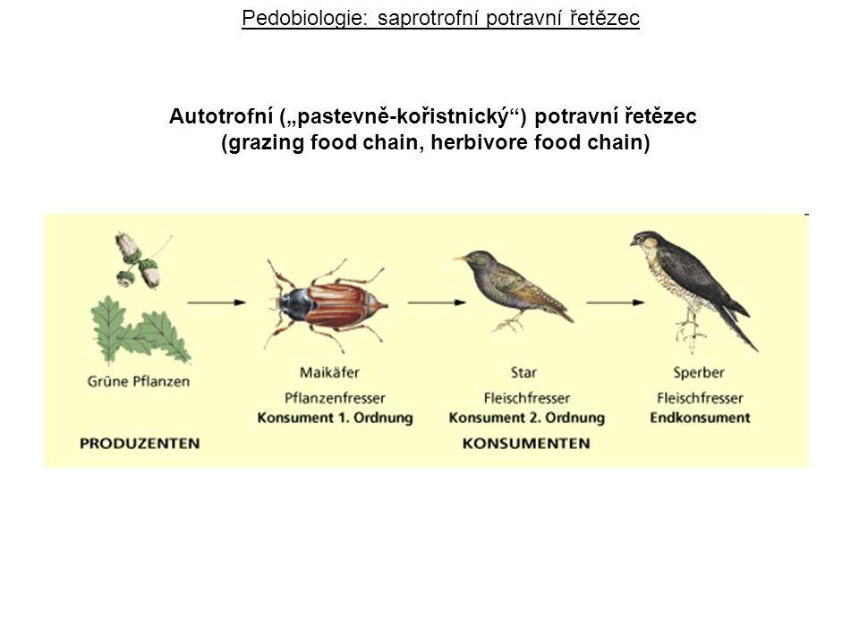 """Pedobiologie: saprotrofní potravní řetězec Autotrofní (""""pastevně-kořistnický ) potravní řetězec (grazing food chain, herbivore food chain)"""