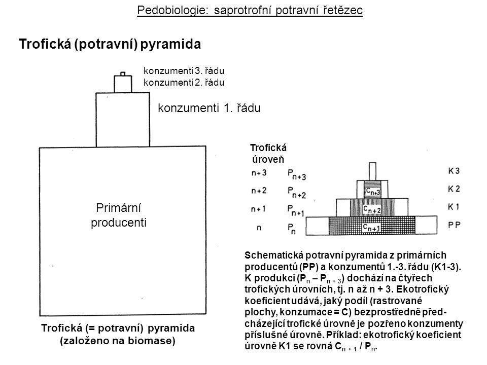 Producers konzumenti 1. řádu konzumenti 3. řádu konzumenti 2. řádu Trofická (= potravní) pyramida (založeno na biomase) Primární producenti Trofická ú