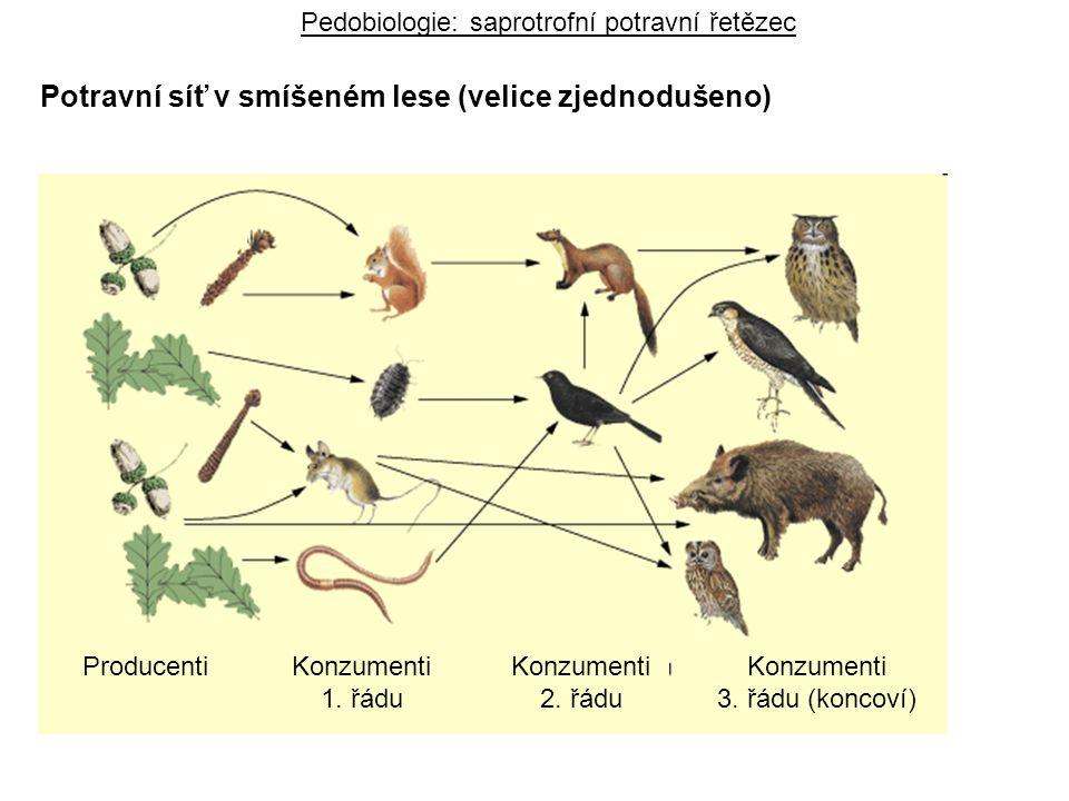 Pedobiologie: saprotrofní potravní řetězec Potravní síť v smíšeném lese (velice zjednodušeno) ProducentiKonzumenti 1. řádu Konzumenti 2. řádu Konzumen