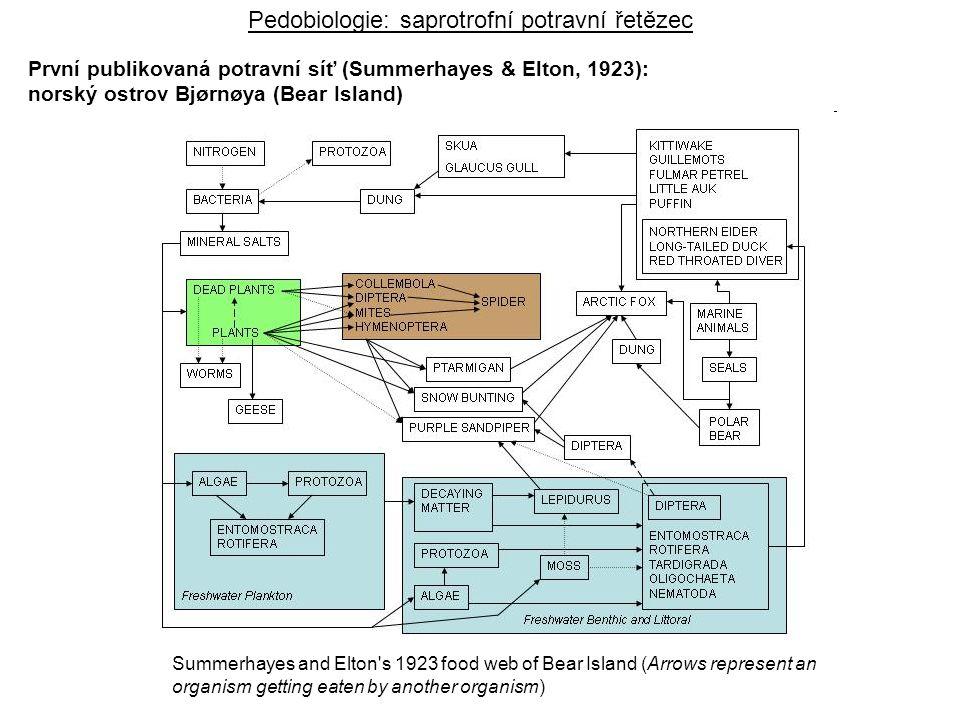 sluneční energie absorbovaná teplo odumřelá organická látka hranice ekosystému Přenos energie v ekosystému Pb – hrubá produkce Pn – čistá produkce Bio – biomasa K1, K2, K3 – konzumenti 1.-3.