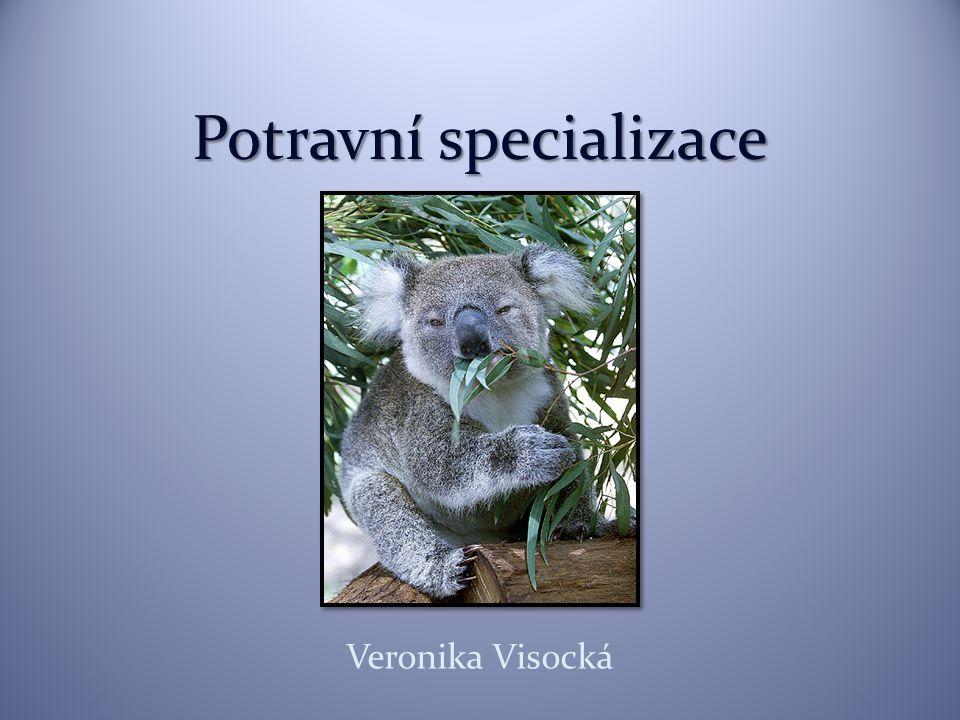 Potravní specializace Veronika Visocká