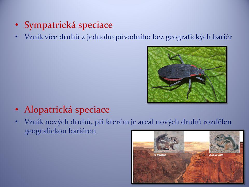 Sympatrická speciace Vznik více druhů z jednoho původního bez geografických bariér Alopatrická speciace Vznik nových druhů, při kterém je areál nových druhů rozdělen geografickou bariérou