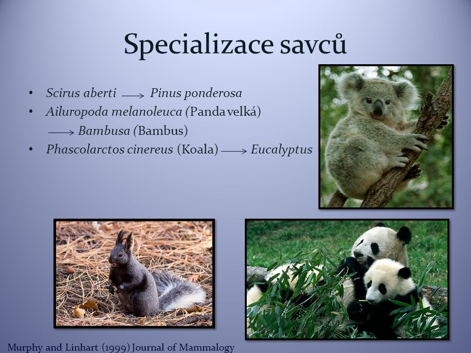 Specializace savců Scirus aberti Pinus ponderosa Ailuropoda melanoleuca (Panda velká) Bambusa (Bambus) Phascolarctos cinereus (Koala) Eucalyptus Murphy and Linhart (1999) Journal of Mammalogy