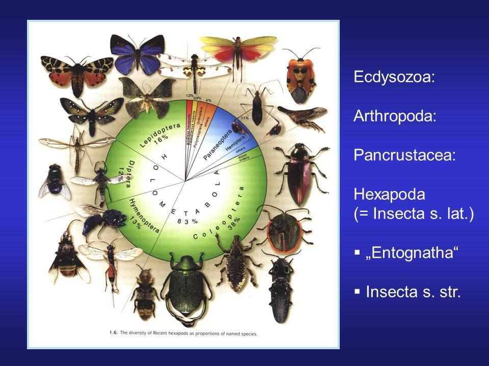 10 100 1.000 10.000 100.000 Počet druhů jednotlivých řádů hmyzu, velký skok mezi nejpočetnějšími hemimetabolními a holometabolními řády Hemi – řádově desítky tisíc, Holo – řádově stovky tisíc