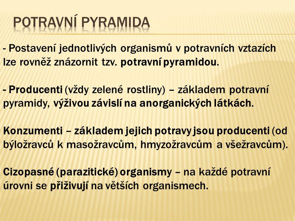 - Postavení jednotlivých organismů v potravních vztazích lze rovněž znázornit tzv. potravní pyramidou. - Producenti (vždy zelené rostliny) – základem