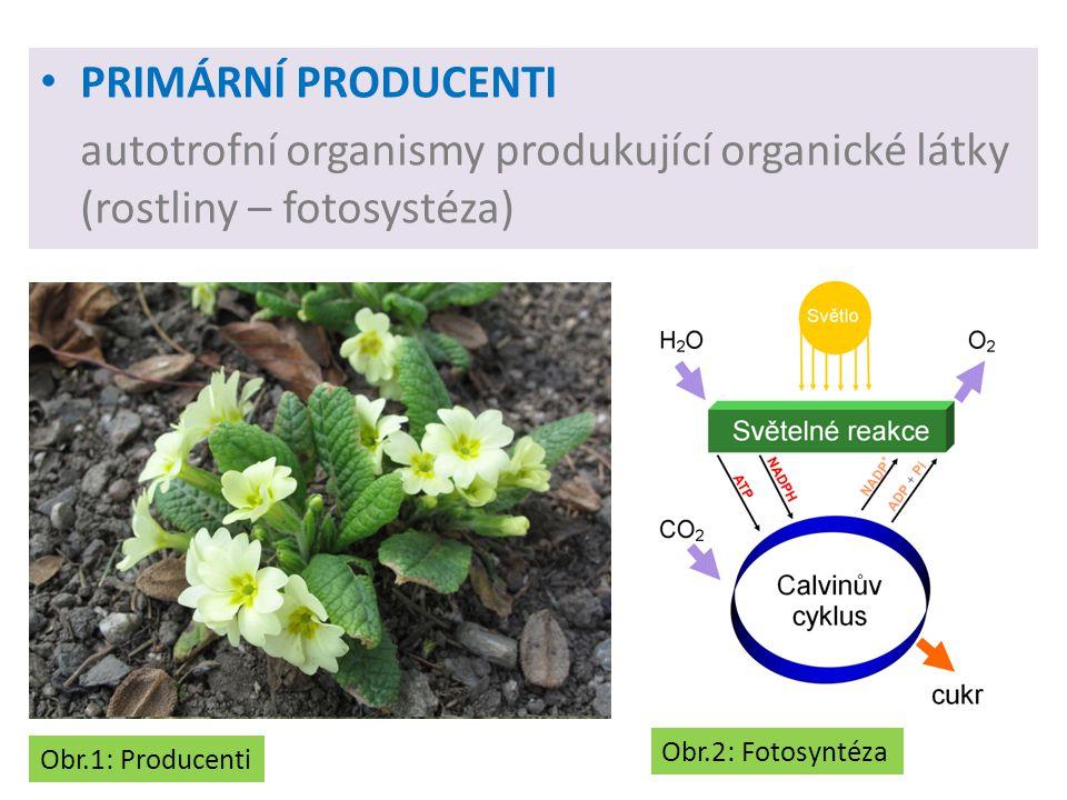 PRIMÁRNÍ PRODUCENTI autotrofní organismy produkující organické látky (rostliny – fotosystéza) Obr.1: Producenti Obr.2: Fotosyntéza