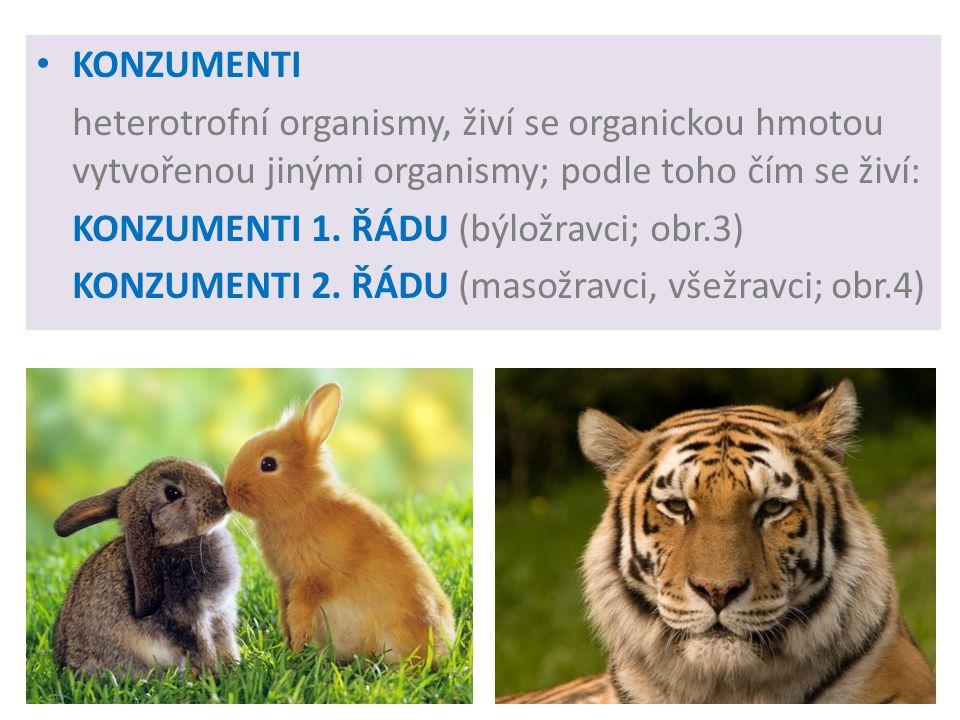 KONZUMENTI heterotrofní organismy, živí se organickou hmotou vytvořenou jinými organismy; podle toho čím se živí: KONZUMENTI 1.