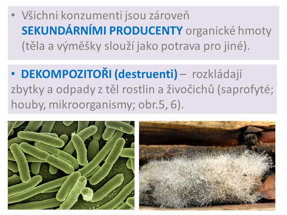 Všichni konzumenti jsou zároveň SEKUNDÁRNÍMI PRODUCENTY organické hmoty (těla a výměšky slouží jako potrava pro jiné).