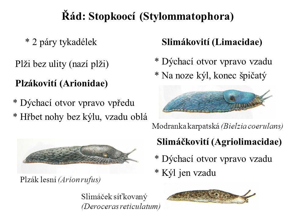 Řád: Stopkoocí (Stylommatophora) * 2 páry tykadélek Plzákovití (Arionidae) Plži bez ulity (nazí plži) * Dýchací otvor vpravo vpředu * Hřbet nohy bez kýlu, vzadu oblá Slimákovití (Limacidae) * Dýchací otvor vpravo vzadu * Na noze kýl, konec špičatý Slimáčkovití (Agriolimacidae) * Dýchací otvor vpravo vzadu * Kýl jen vzadu Plzák lesní (Arion rufus) Modranka karpatská (Bielzia coerulans) Slimáček síťkovaný (Deroceras reticulatum)