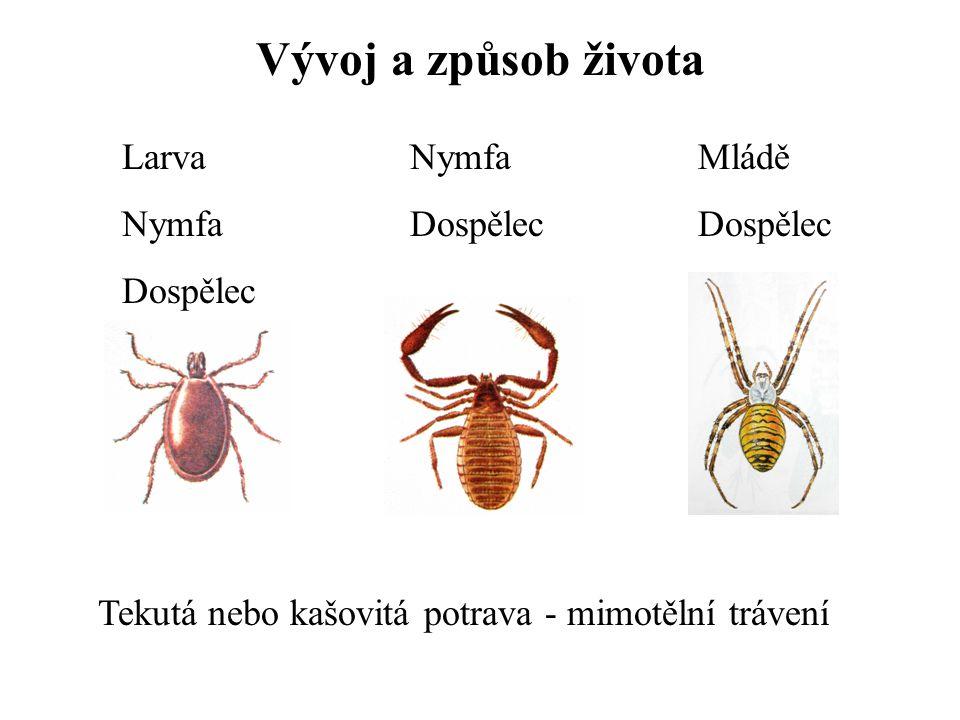 Vývoj a způsob života Larva Nymfa Dospělec Nymfa Dospělec Mládě Dospělec Tekutá nebo kašovitá potrava - mimotělní trávení