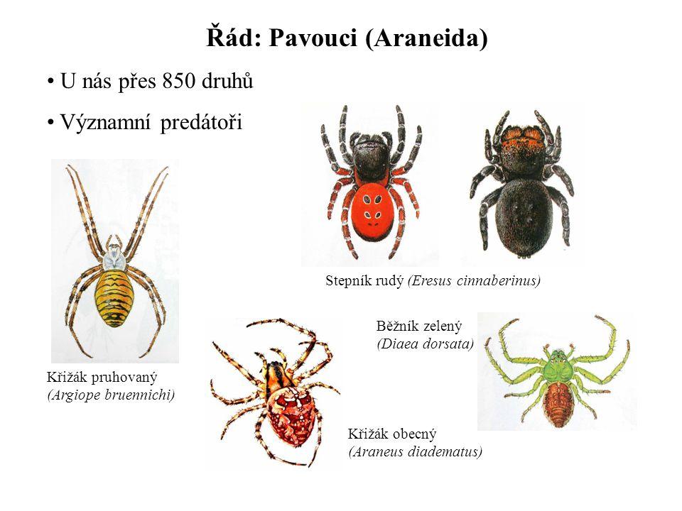 Řád: Pavouci (Araneida) U nás přes 850 druhů Významní predátoři Křižák pruhovaný (Argiope bruennichi) Stepník rudý (Eresus cinnaberinus) Křižák obecný (Araneus diadematus) Běžník zelený (Diaea dorsata)