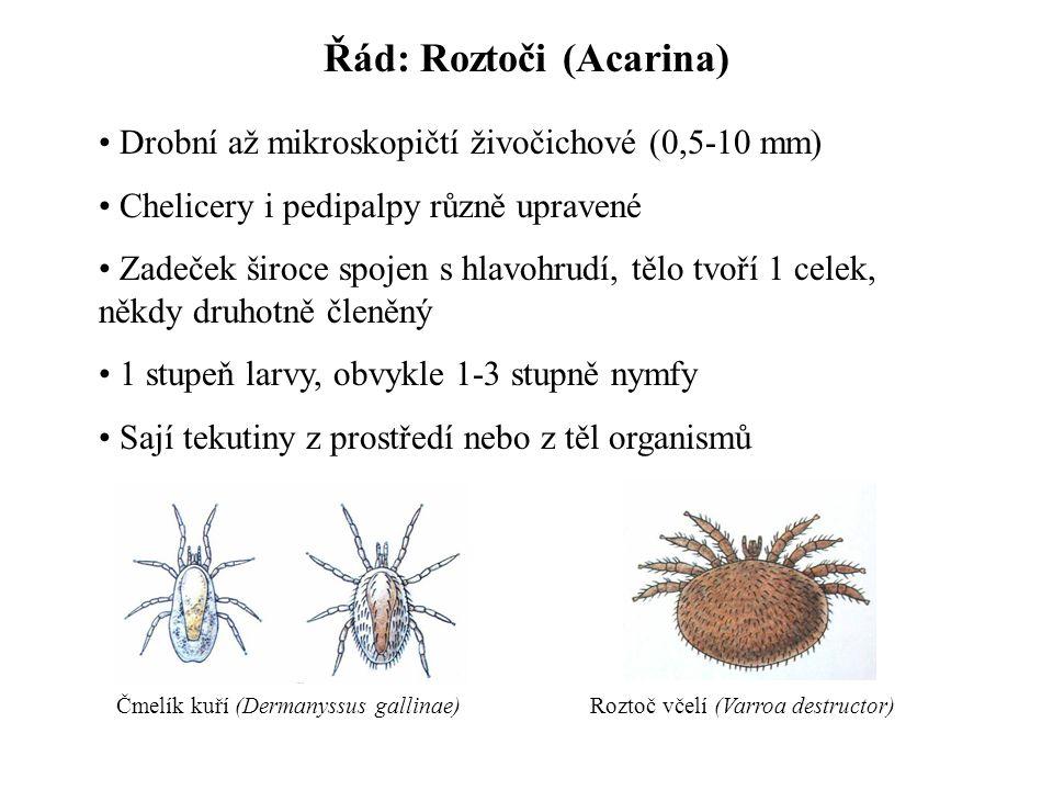 Řád: Roztoči (Acarina) Drobní až mikroskopičtí živočichové (0,5-10 mm) Chelicery i pedipalpy různě upravené Zadeček široce spojen s hlavohrudí, tělo tvoří 1 celek, někdy druhotně členěný 1 stupeň larvy, obvykle 1-3 stupně nymfy Sají tekutiny z prostředí nebo z těl organismů Čmelík kuří (Dermanyssus gallinae)Roztoč včelí (Varroa destructor)