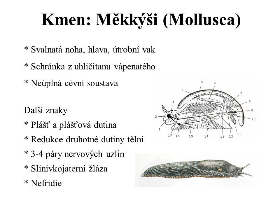 Kmen: Měkkýši (Mollusca) * Svalnatá noha, hlava, útrobní vak * Schránka z uhličitanu vápenatého * Neúplná cévní soustava Další znaky * Plášť a plášťová dutina * Redukce druhotné dutiny tělní * 3-4 páry nervových uzlin * Slinivkojaterní žláza * Nefridie