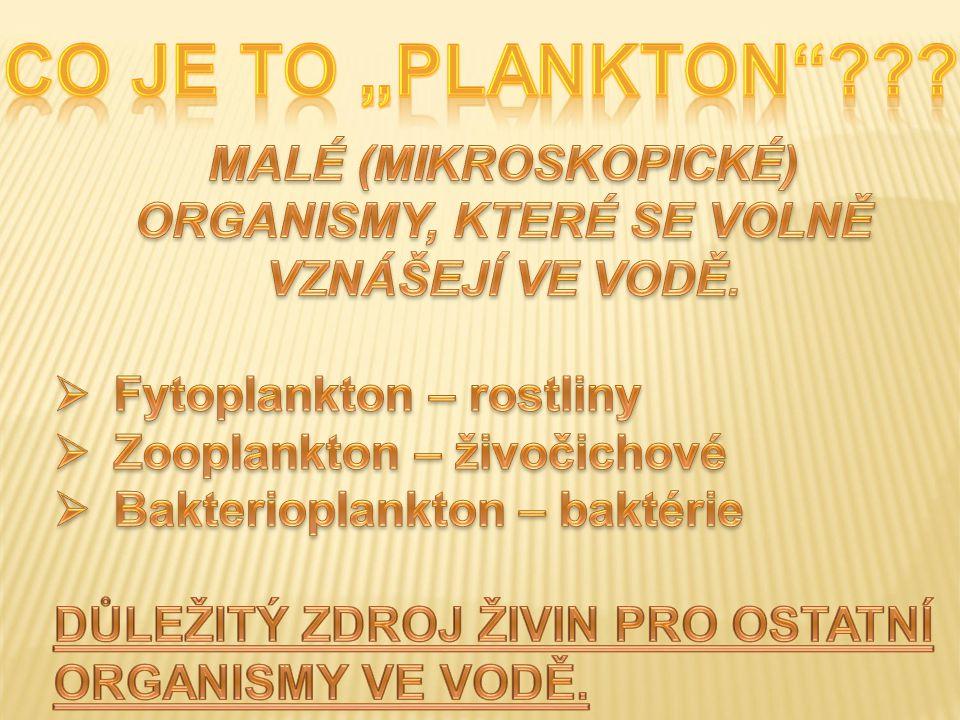 Plankton rybníka Plankton – malé organismy vznášející se ve vodě, zdroj potravy vodních živočichů.
