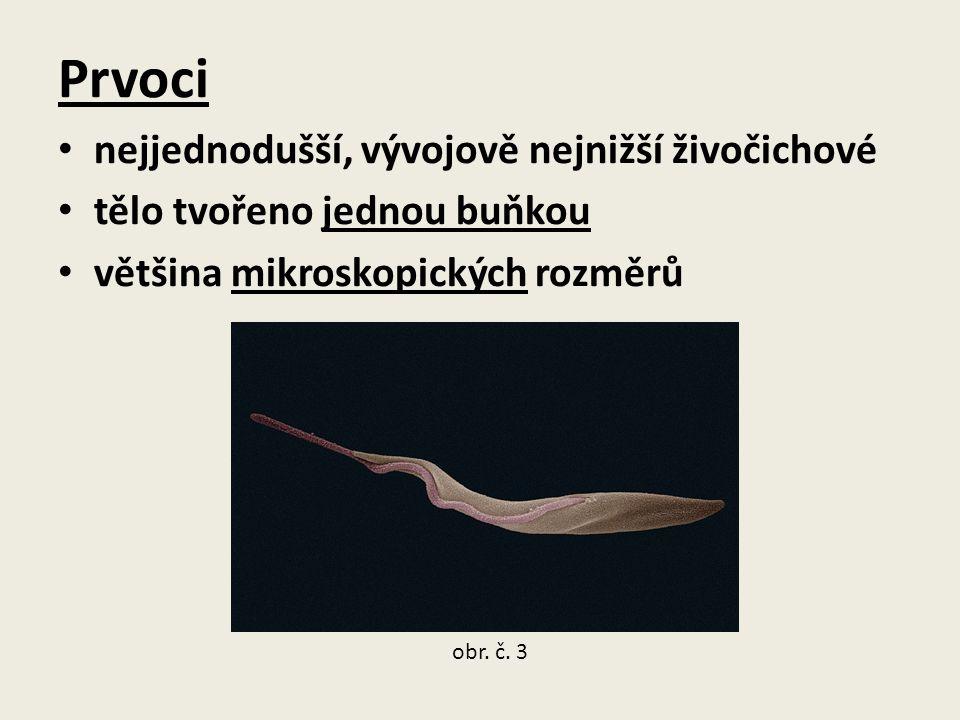 Prvoci nejjednodušší, vývojově nejnižší živočichové tělo tvořeno jednou buňkou většina mikroskopických rozměrů obr. č. 3