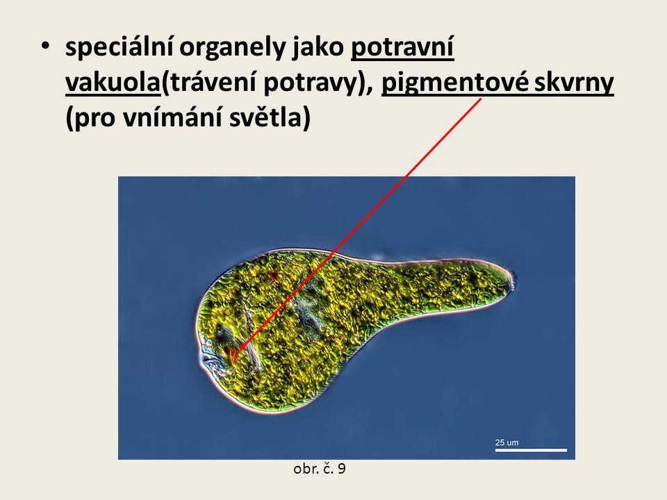 speciální organely jako potravní vakuola(trávení potravy), pigmentové skvrny (pro vnímání světla) obr. č. 9