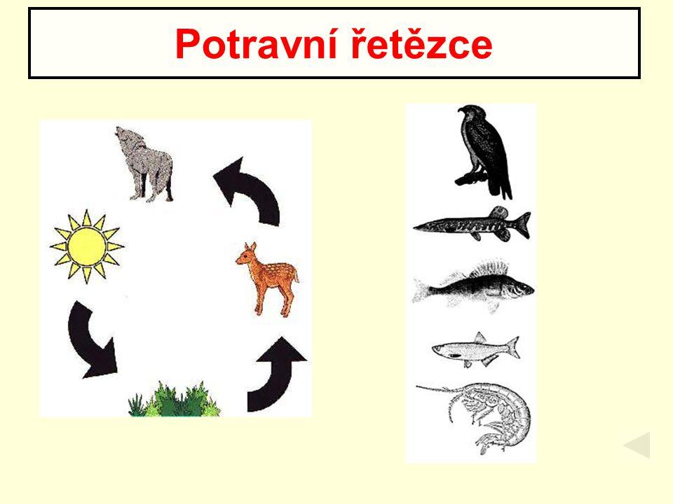  popisují přesněji potravní vztahy v ekosystému  jedná se o rozvětvené potravní řetězce Potravní sítě