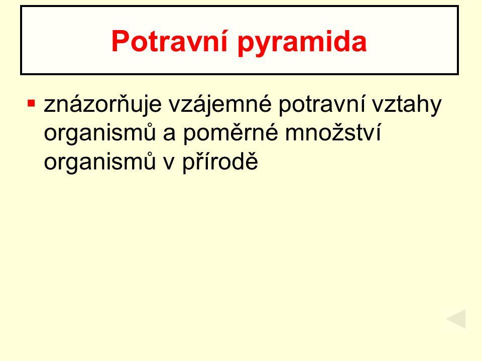 1.producenti 2. býložravci - konzumenti I. řádu 3.