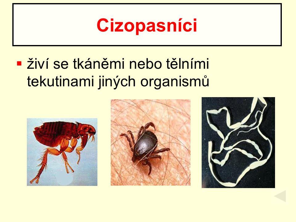  živí se tkáněmi nebo tělními tekutinami jiných organismů Cizopasníci