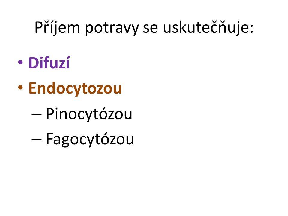 Příjem potravy se uskutečňuje: Difuzí Endocytozou – Pinocytózou – Fagocytózou