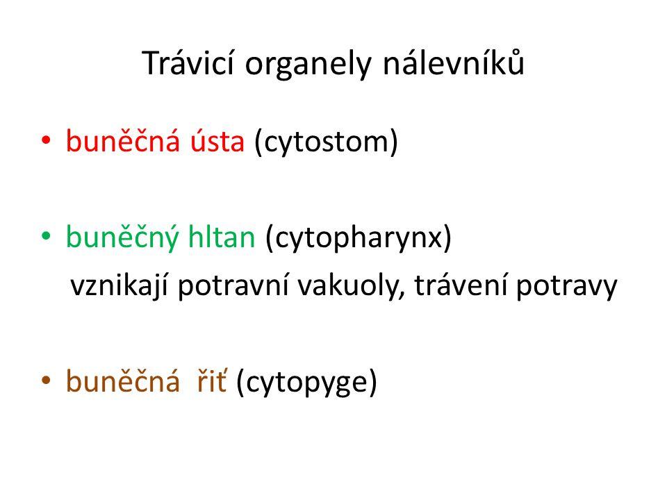 Trávicí organely nálevníků buněčná ústa (cytostom) buněčný hltan (cytopharynx) vznikají potravní vakuoly, trávení potravy buněčná řiť (cytopyge)