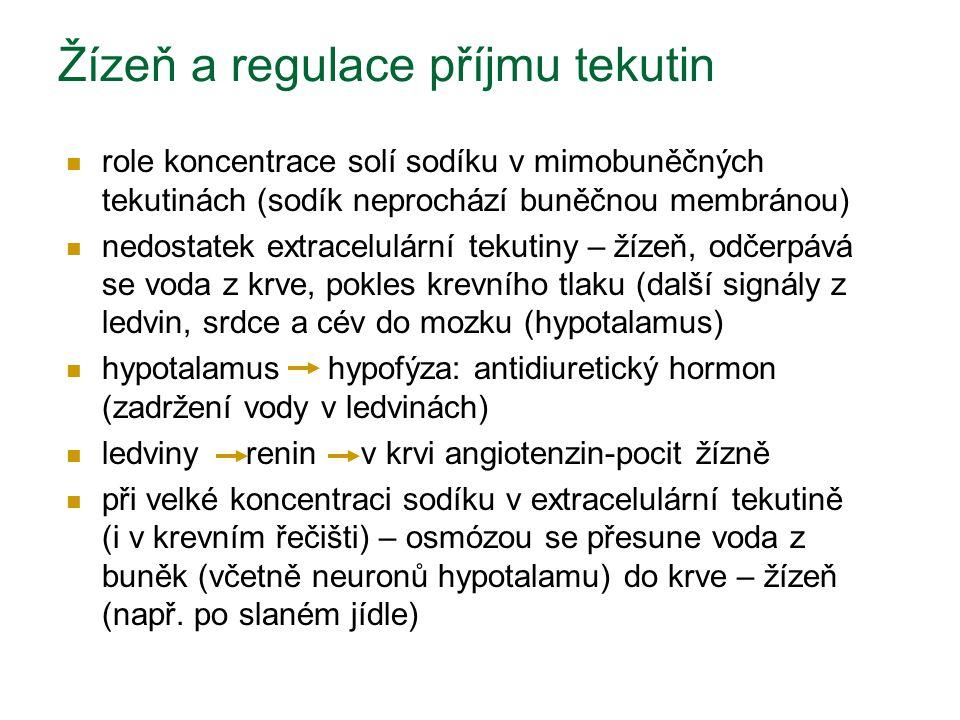 Žízeň a regulace příjmu tekutin role koncentrace solí sodíku v mimobuněčných tekutinách (sodík neprochází buněčnou membránou) nedostatek extracelulárn