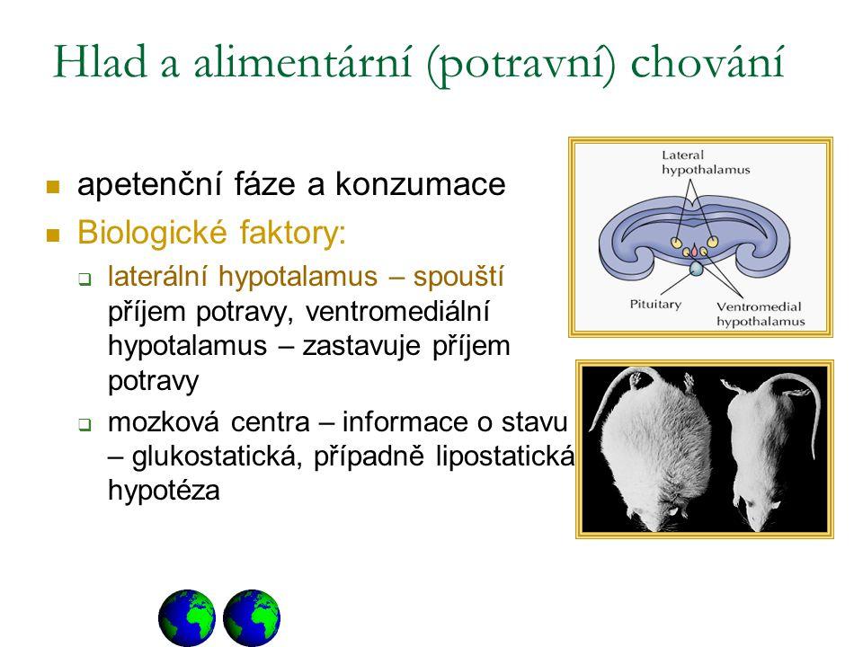 Hlad a alimentární (potravní) chování apetenční fáze a konzumace Biologické faktory:  laterální hypotalamus – spouští příjem potravy, ventromediální