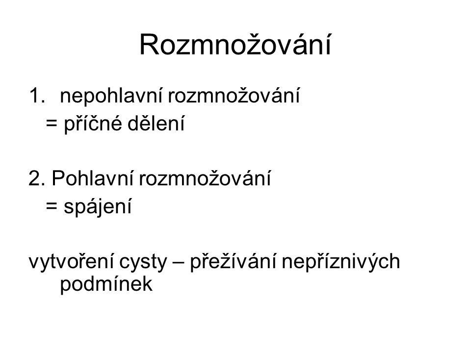 Rozmnožování 1.nepohlavní rozmnožování = příčné dělení 2. Pohlavní rozmnožování = spájení vytvoření cysty – přežívání nepříznivých podmínek