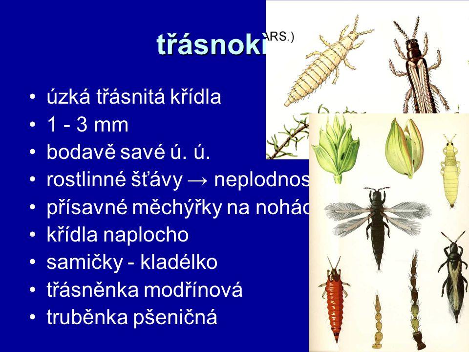 třásnokřídlí úzká třásnitá křídla 1 - 3 mm bodavě savé ú. ú. rostlinné šťávy → neplodnost květů přísavné měchýřky na nohách křídla naplocho samičky -