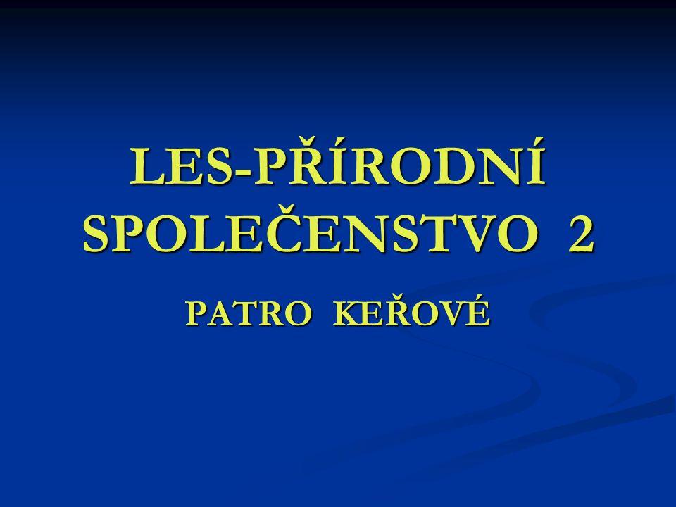 LES-PŘÍRODNÍ SPOLEČENSTVO 2 PATRO KEŘOVÉ