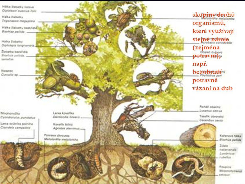 skupiny druhů organismů, které využívají stejné zdroje (zejména potravní), např.