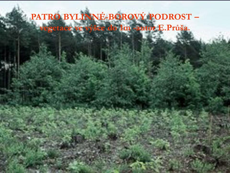 PATRO BYLINNÉ-BOROVÝ PODROST – vegetace ve výšce do 1m -autor E.Průša.