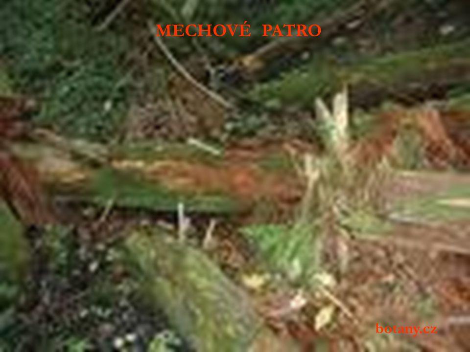 Význam mechového patra spočívá především v jeho schopnosti zadržovat a posléze postupně uvolňovat vodu, proto lesy s větším podílem mechů lépe chrání krajinu pod nimi před erozí a náhlými změnami průtoků (sucha, povodně).