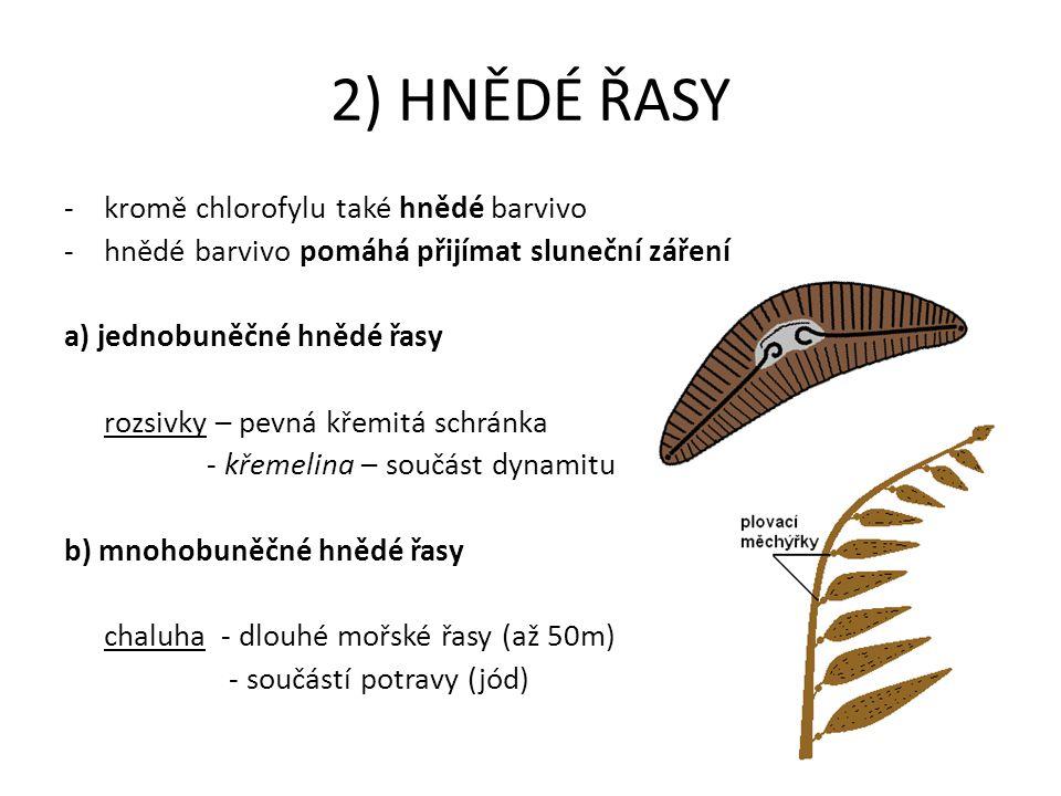 2) HNĚDÉ ŘASY -kromě chlorofylu také hnědé barvivo -hnědé barvivo pomáhá přijímat sluneční záření a) jednobuněčné hnědé řasy rozsivky – pevná křemitá
