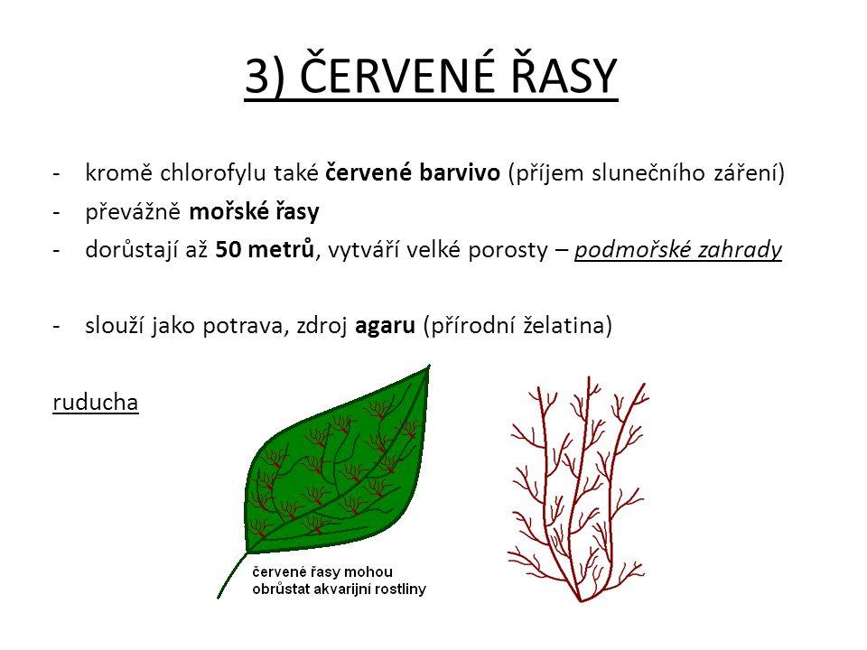 3) ČERVENÉ ŘASY - kromě chlorofylu také červené barvivo (příjem slunečního záření) -převážně mořské řasy -dorůstají až 50 metrů, vytváří velké porosty
