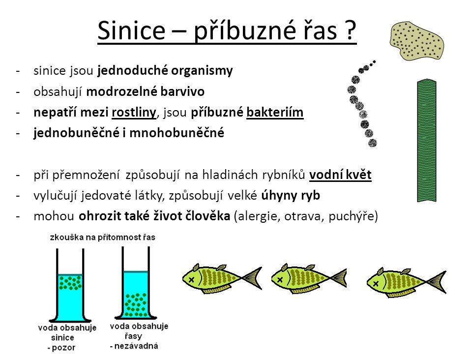 -sinice jsou jednoduché organismy -obsahují modrozelné barvivo -nepatří mezi rostliny, jsou příbuzné bakteriím -jednobuněčné i mnohobuněčné - při přem