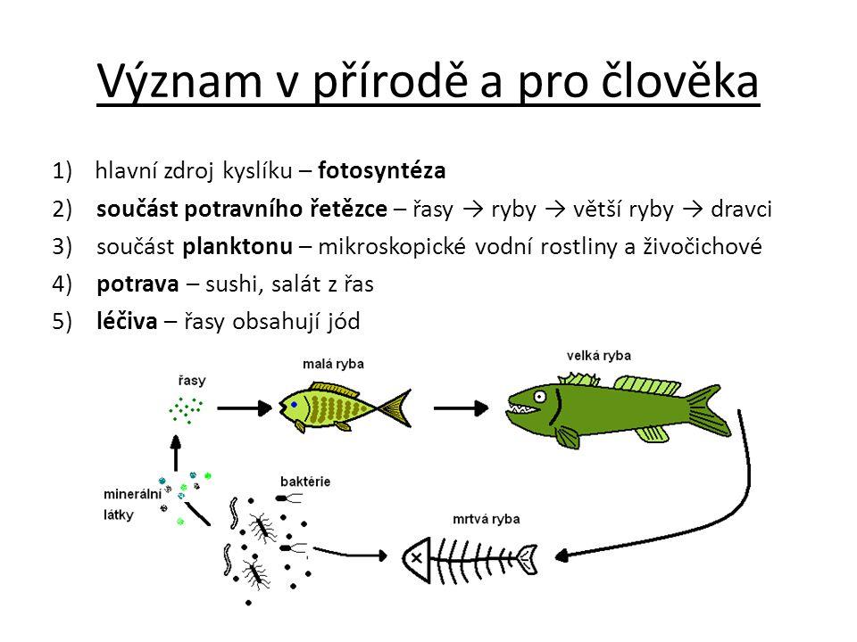 Význam v přírodě a pro člověka 1)hlavní zdroj kyslíku – fotosyntéza 2) součást potravního řetězce – řasy → ryby → větší ryby → dravci 3) součást plank