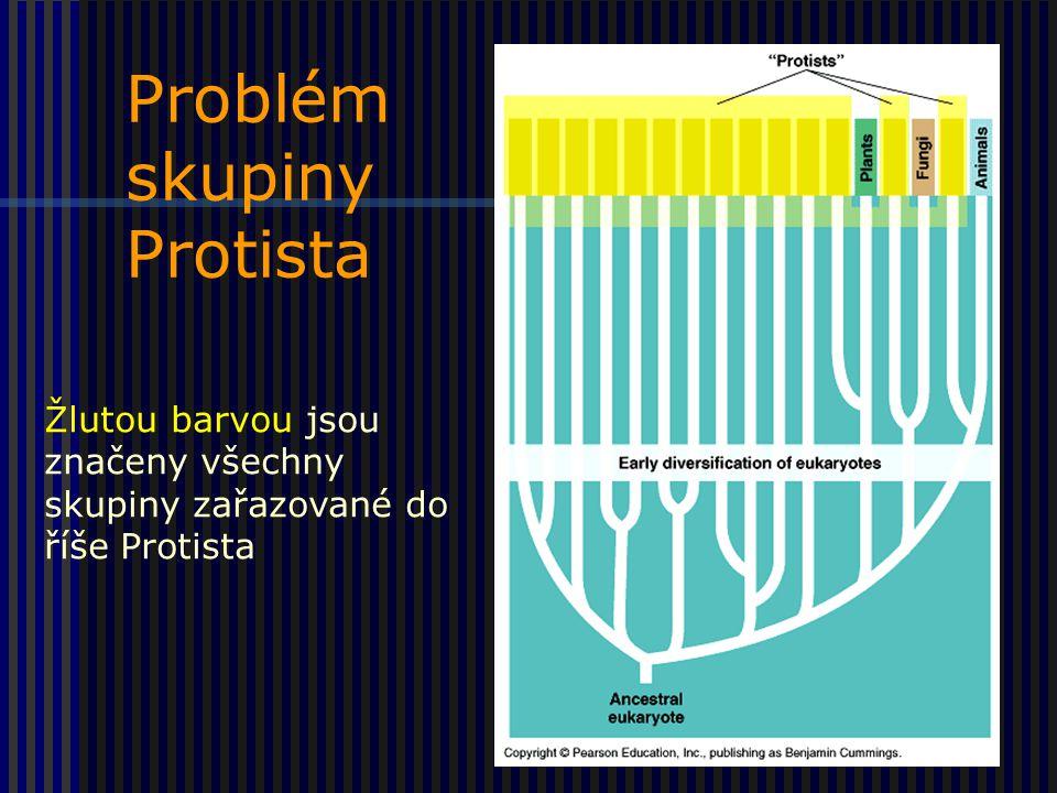 Problém skupiny Protista Žlutou barvou jsou značeny všechny skupiny zařazované do říše Protista
