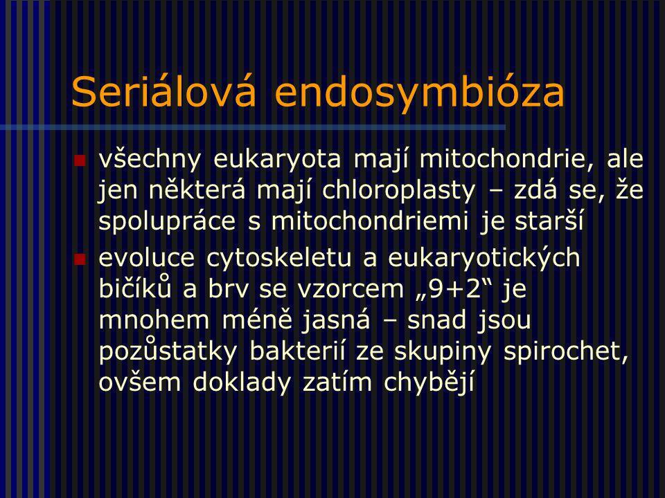 """Seriálová endosymbióza všechny eukaryota mají mitochondrie, ale jen některá mají chloroplasty – zdá se, že spolupráce s mitochondriemi je starší evoluce cytoskeletu a eukaryotických bičíků a brv se vzorcem """"9+2 je mnohem méně jasná – snad jsou pozůstatky bakterií ze skupiny spirochet, ovšem doklady zatím chybějí"""
