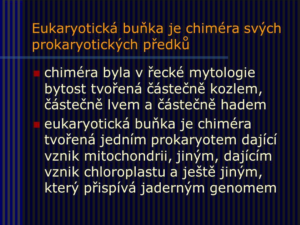 Eukaryotická buňka je chiméra svých prokaryotických předků chiméra byla v řecké mytologie bytost tvořená částečně kozlem, částečně lvem a částečně hadem eukaryotická buňka je chiméra tvořená jedním prokaryotem dající vznik mitochondrii, jiným, dajícím vznik chloroplastu a ještě jiným, který přispívá jaderným genomem