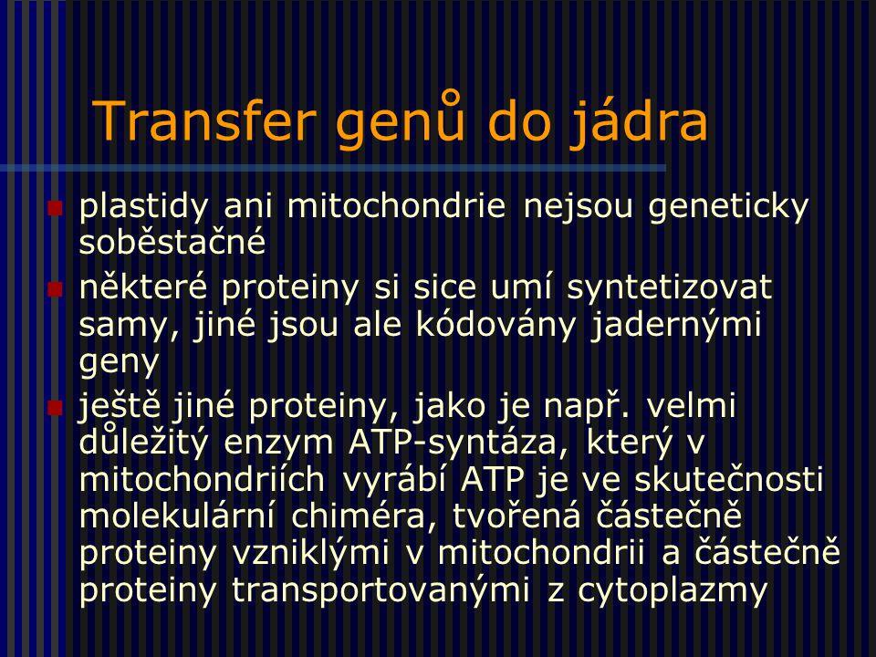 Transfer genů do jádra plastidy ani mitochondrie nejsou geneticky soběstačné některé proteiny si sice umí syntetizovat samy, jiné jsou ale kódovány jadernými geny ještě jiné proteiny, jako je např.