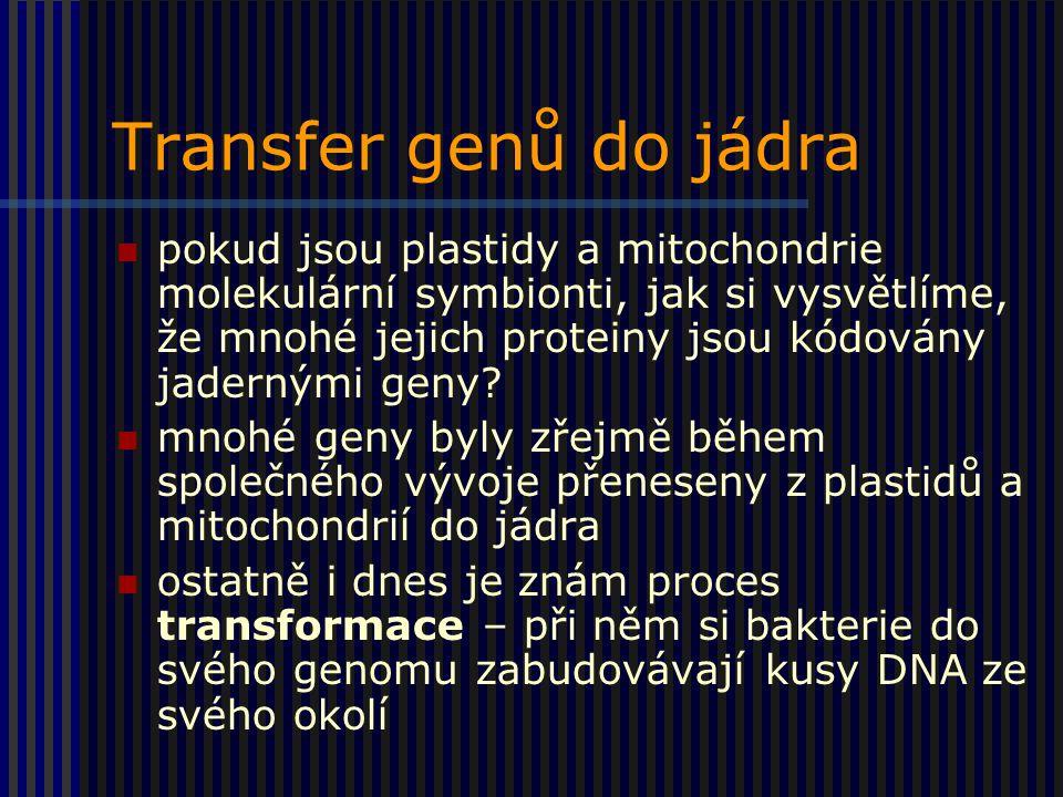 Transfer genů do jádra pokud jsou plastidy a mitochondrie molekulární symbionti, jak si vysvětlíme, že mnohé jejich proteiny jsou kódovány jadernými geny.