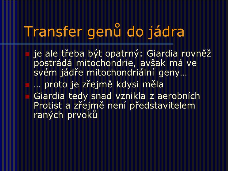 Transfer genů do jádra je ale třeba být opatrný: Giardia rovněž postrádá mitochondrie, avšak má ve svém jádře mitochondriální geny… … proto je zřejmě kdysi měla Giardia tedy snad vznikla z aerobních Protist a zřejmě není představitelem raných prvoků