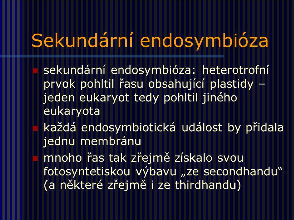 """Sekundární endosymbióza sekundární endosymbióza: heterotrofní prvok pohltil řasu obsahující plastidy – jeden eukaryot tedy pohltil jiného eukaryota každá endosymbiotická událost by přidala jednu membránu mnoho řas tak zřejmě získalo svou fotosyntetiskou výbavu """"ze secondhandu (a některé zřejmě i ze thirdhandu)"""