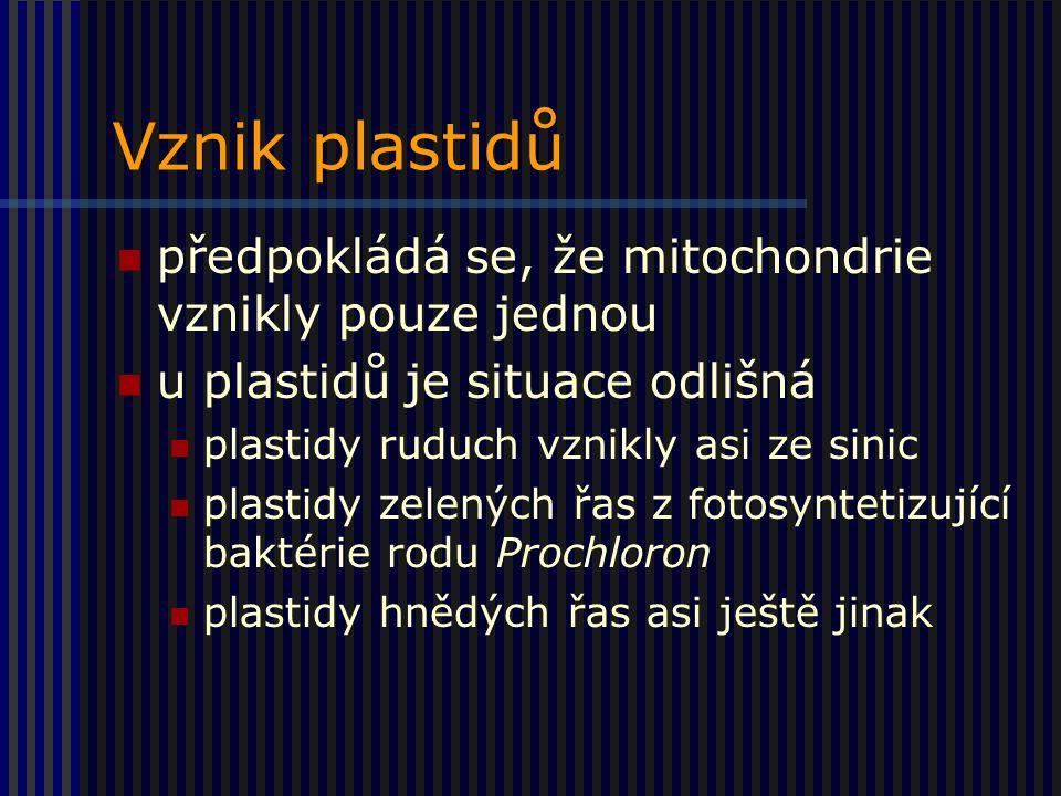 Vznik plastidů předpokládá se, že mitochondrie vznikly pouze jednou u plastidů je situace odlišná plastidy ruduch vznikly asi ze sinic plastidy zelených řas z fotosyntetizující baktérie rodu Prochloron plastidy hnědých řas asi ještě jinak