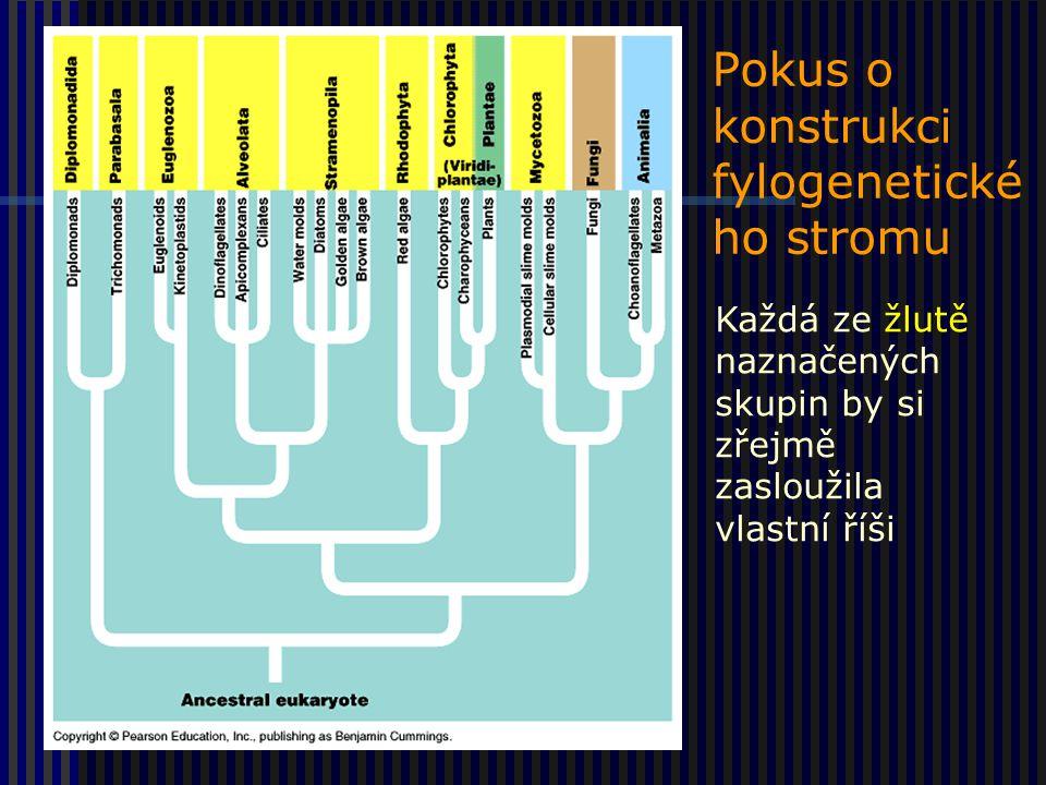 Pokus o konstrukci fylogenetické ho stromu Každá ze žlutě naznačených skupin by si zřejmě zasloužila vlastní říši