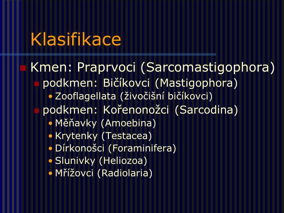 Klasifikace Kmen: Praprvoci (Sarcomastigophora) podkmen: Bičíkovci (Mastigophora) Zooflagellata (živočišní bičíkovci) podkmen: Kořenonožci (Sarcodina) Měňavky (Amoebina) Krytenky (Testacea) Dírkonošci (Foraminifera) Slunivky (Heliozoa) Mřížovci (Radiolaria)