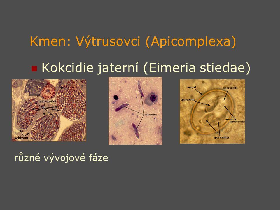 Kmen: Výtrusovci (Apicomplexa) Kokcidie jaterní (Eimeria stiedae) různé vývojové fáze