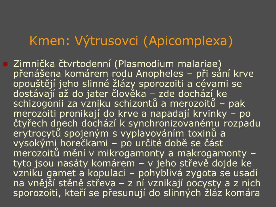 Kmen: Výtrusovci (Apicomplexa) Zimnička čtvrtodenní (Plasmodium malariae) přenášena komárem rodu Anopheles – při sání krve opouštějí jeho slinné žlázy sporozoiti a cévami se dostávají až do jater člověka – zde dochází ke schizogonii za vzniku schizontů a merozoitů – pak merozoiti pronikají do krve a napadají krvinky – po čtyřech dnech dochází k synchronizovanému rozpadu erytrocytů spojeným s vyplavováním toxinů a vysokými horečkami – po určité době se část merozoitů mění v mikrogamonty a makrogamonty – tyto jsou nasáty komárem – v jeho střevě dojde ke vzniku gamet a kopulaci – pohyblivá zygota se usadí na vnější stěně střeva – z ní vznikají oocysty a z nich sporozoiti, kteří se přesunují do slinných žláz komára