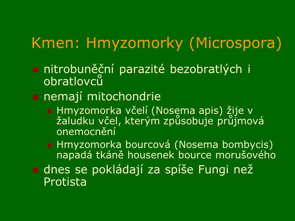 Kmen: Hmyzomorky (Microspora) nitrobuněční parazité bezobratlých i obratlovců nemají mitochondrie Hmyzomorka včelí (Nosema apis) žije v žaludku včel, kterým způsobuje průjmová onemocnění Hmyzomorka bourcová (Nosema bombycis) napadá tkáně housenek bource morušového dnes se pokládají za spíše Fungi než Protista